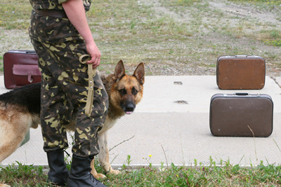 German shepherd with an officer of the border guard