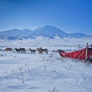 Polish man enters 1000-mile Yukon sled dog race - without dogs