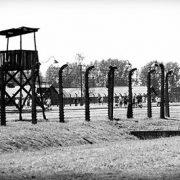 UN releases holocaust documents